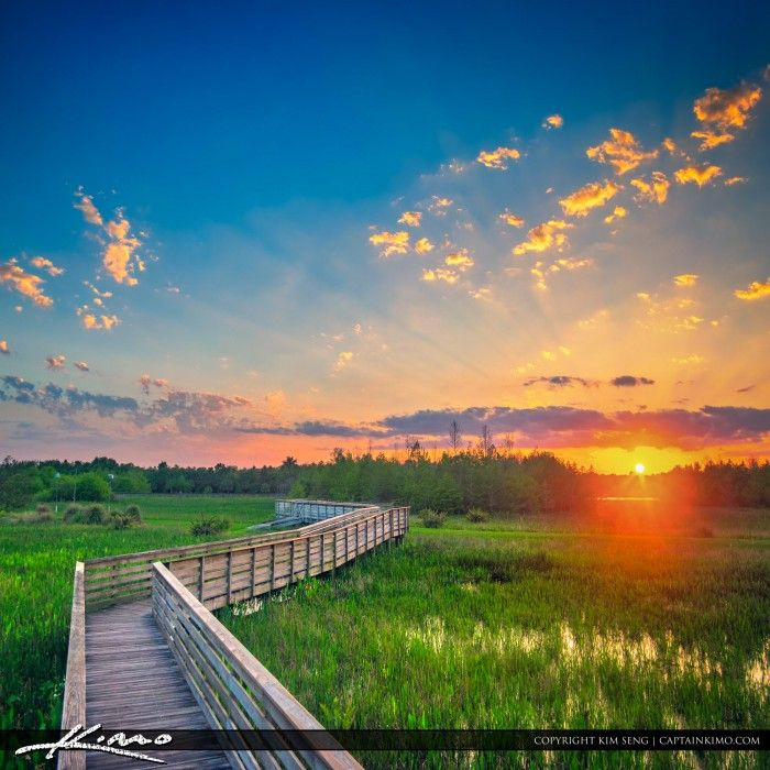 Beautiful sunset from Green Cay Wetlands yesterday evening along the boardwalk in Boynton Beach Florida. HDR image created using Aurora HDR software by Macphun.