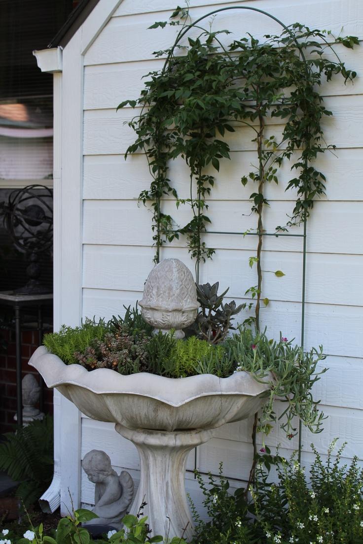17 best succulents images on Pinterest   Succulents, Succulents ...