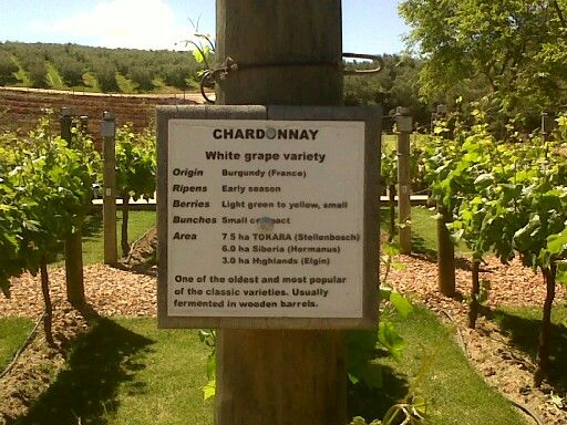 Chardonney...this is where it happens.