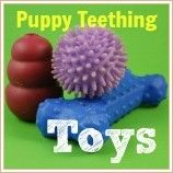 Learn how to choose puppy teething toys