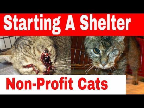 Starting a Non-Profit Cat-Shelter by The Catnip Mafia Shelter