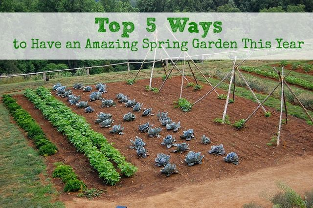 Top 5 Ways to Have an Amazing Spring Garden This Year :: Five Little Homesteaders