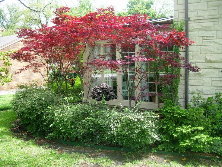 Japanese maple gardens and yards pinterest small for Tiny ornamental trees