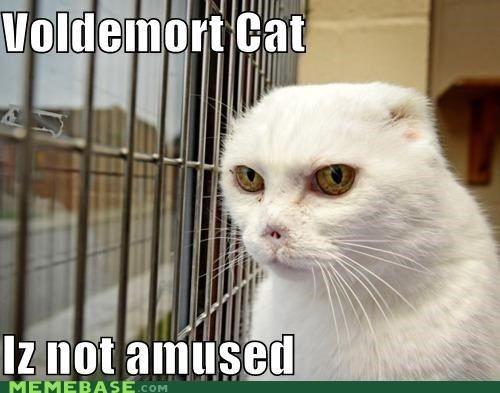 Not Funny Cat Meme : Best images about harry potter memes on pinterest