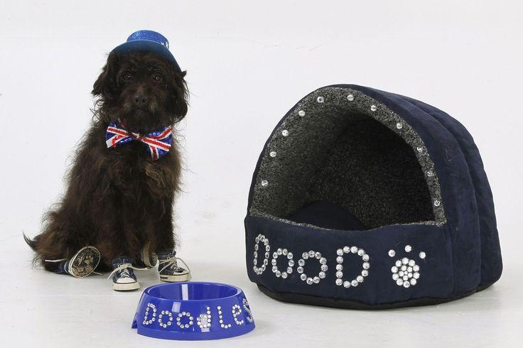 British Dog Lover Spends £30,000 on her Nine Pets