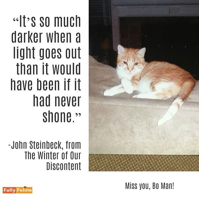 In honor of Rainbow Bridge Remembrance Day, my angel and inspiration, Bo. I miss him always! #quote