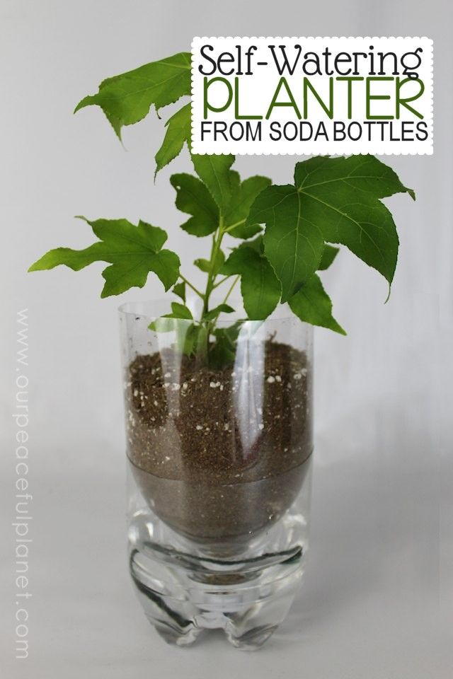 Self Watering Planter from Soda Bottles