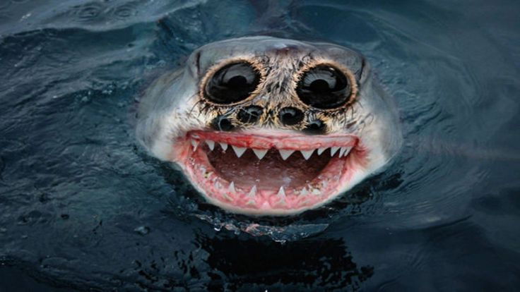 Top 10 Most Terrifying Animals - Published on Apr 1, 2015 ...