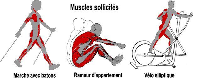 Muscles sollicités en velo elliptique,rameur et marche nordique