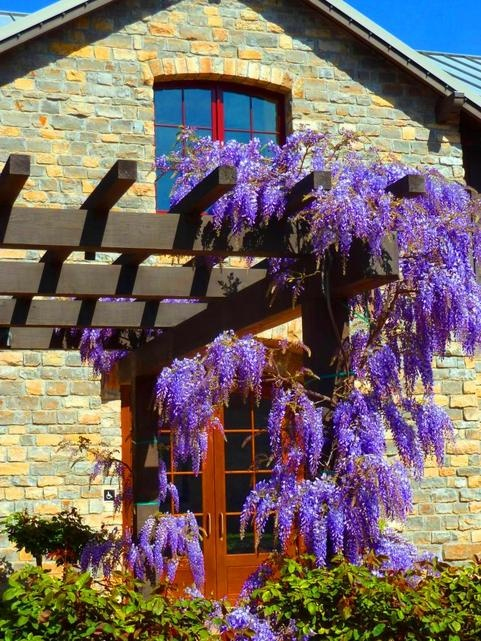 Spring arrives in Napa Valley wine country!