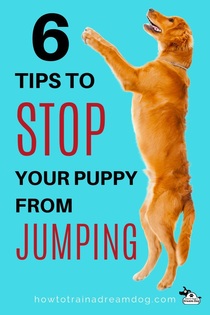 6 Tips To Stop Your Puppy From Jumping Dog Training Training