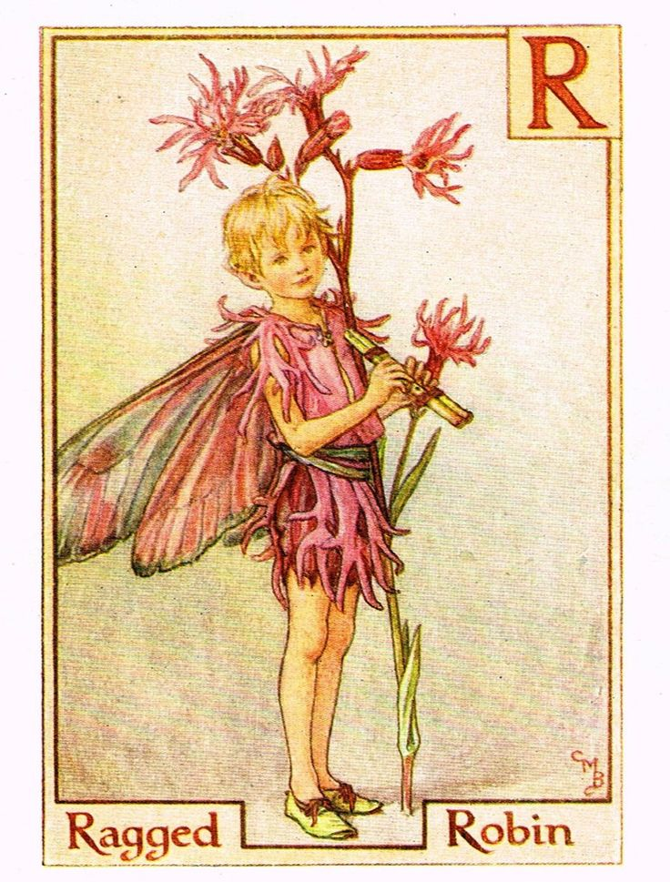 """Cicely Barker's Fairy Print - """"RAGED ROBIN"""" - Children's Lithogrpah - c1935"""