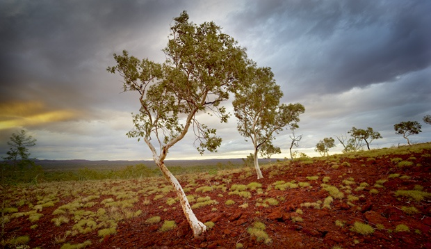 The furthermost reaches of the Pilbara, extending from Newman to the interior border of Western Australia, occupy true desert country. This image, of a svelte ghost gum common to the region, was taken in Rudall River National Park.    This is Martu country, the loosely collective name for the Indigenous custodians of this region, whose communities are sprinkled throughout what is extremely isolated terrain.