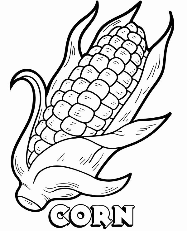 Corn On The Cob Coloring Page Fresh Printable Corn Picture To And Color Coloring Pages Vegetable Coloring Pages Rose Coloring Pages