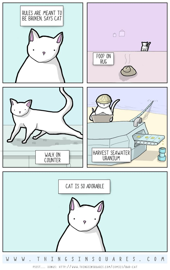 don't do that, cat