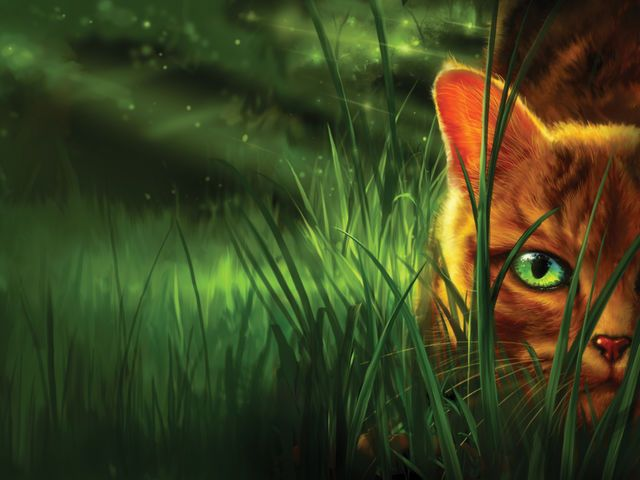 What Warriors Clan Are You Warrior Cats Books Warrior Cats Art Warrior Cats