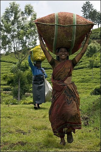 Tea collection, India- Just look at her posture! No sloping shoulders or stooped back, and a happy smile to boot!