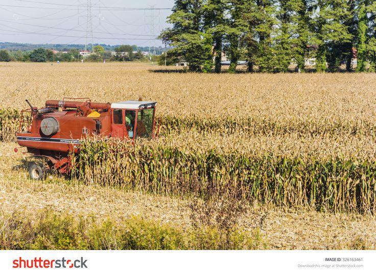 Biskupice Radlowskie, Poland - October 2, 2015: Red Combine Harvester During Harvesting Corn (Maize) Stock Photo 326163461 : Shutterstock