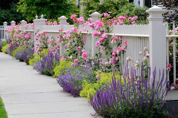 Lavender along fence ironwood landcrafters inc for Garden design with roses