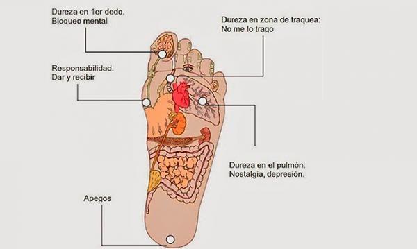 Interior varikoz de los pies de la foto
