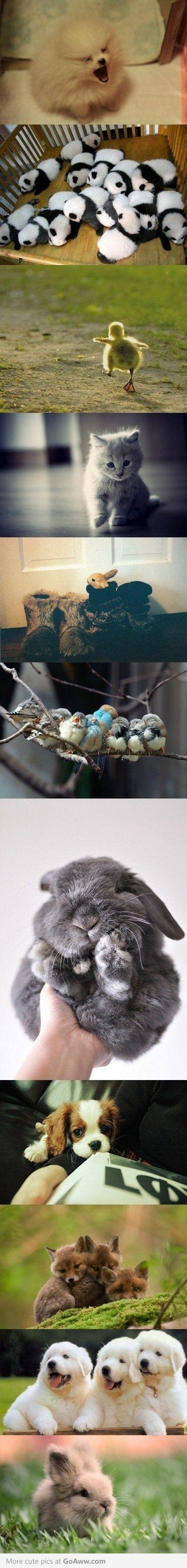 Little balls of fur.