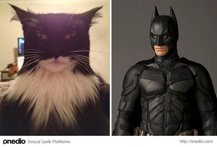Bu kedi ve Batman