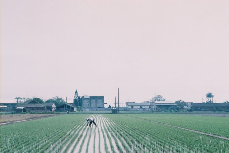 農夫 | by Hsien hui Tsai