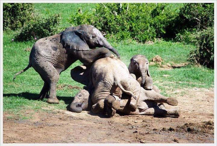 """Elephant pile!"""