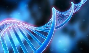 Genetic Variation Lesson Plan from NGSS life science