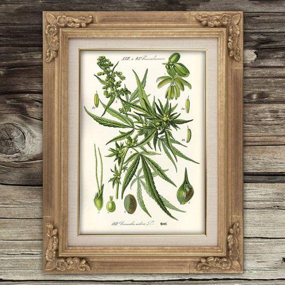 Medizinisches Marihuana Plakatkunst Print wissenschaftliche Illustration Cannabis Blätter und Samen Office Dorm Küche Klassenzimmer Dispensary Wand Dekor