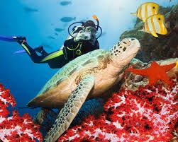 Image result for scuba diving in maldives