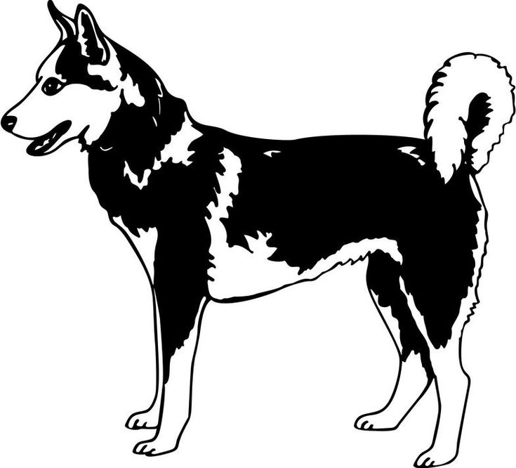 17 best images about iditarod winter 2015 2016 on for Iditarod coloring pages