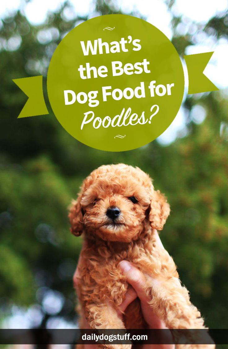 Best Dog Food For Toy Poodles Puppies