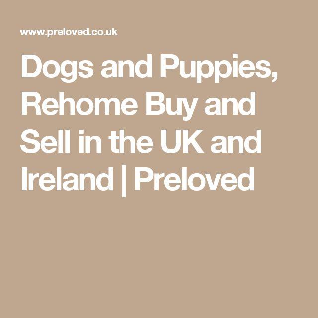Dogs and Puppies, Rehome Buy and Sell in the UK and Ireland | Preloved