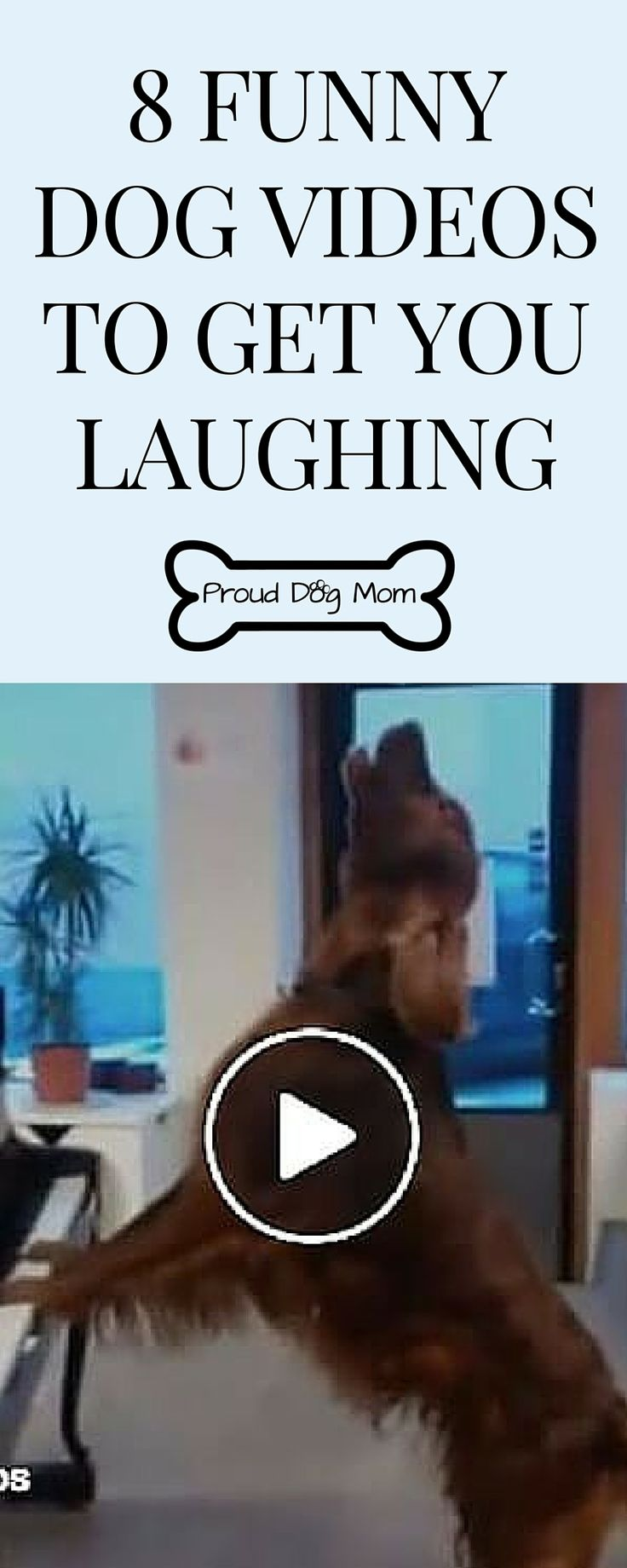Watch These 8 Funny Dog Videos For a Good Laugh | Cute Dogs |