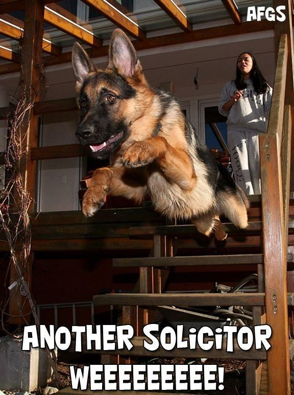 run, human, run #german #shepherd #dog