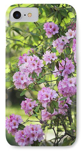 Jenny Rainbow Fine Art Photography IPhone 7 Case featuring the photograph Pink Rhododendron Bloom by Jenny Rainbow
