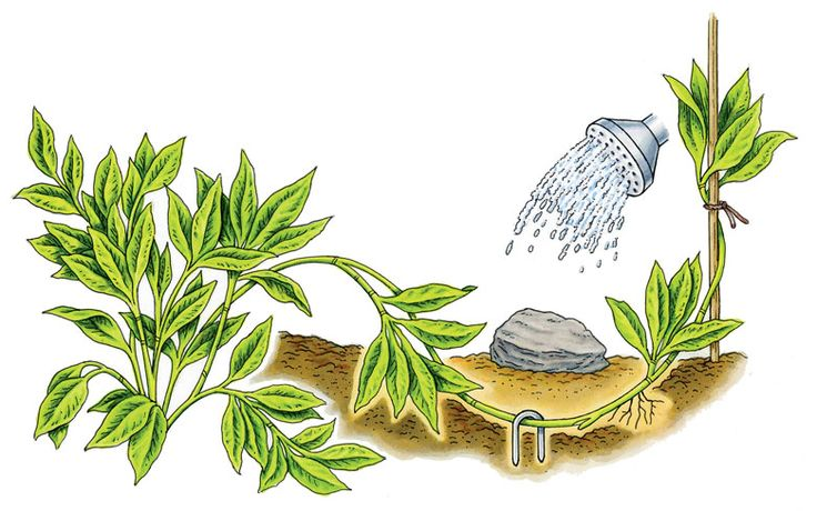 89 best images about gardening propagation on pinterest. Black Bedroom Furniture Sets. Home Design Ideas
