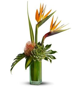 succulents, protea, birds of paradise