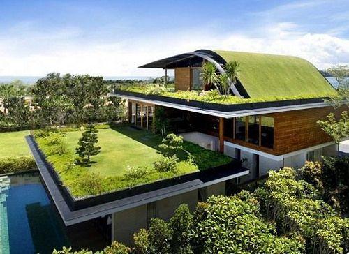 techos verdes azotea ms