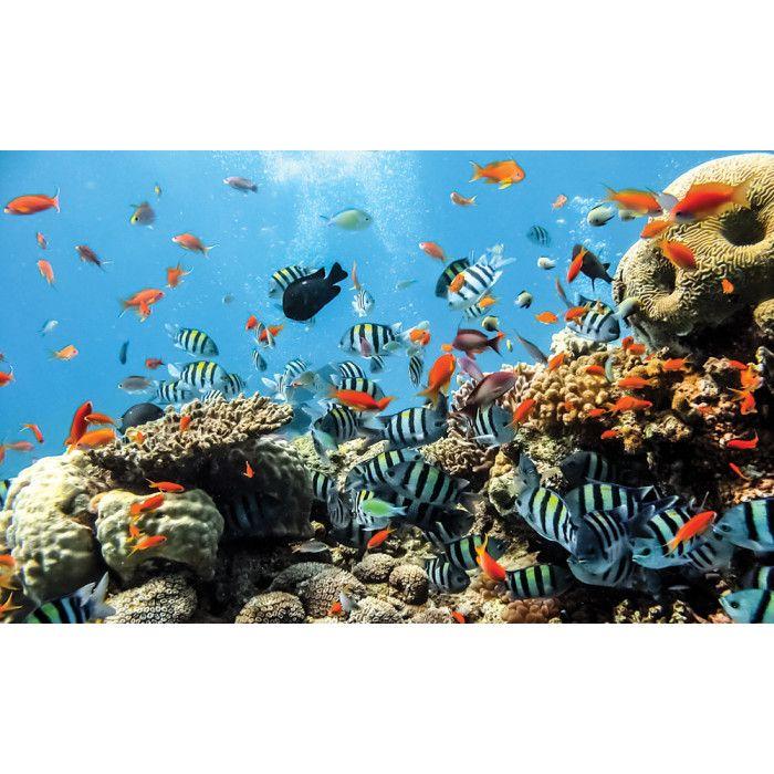 Les 25 meilleures id es de la cat gorie aquarium mural sur for Petit aquarium original