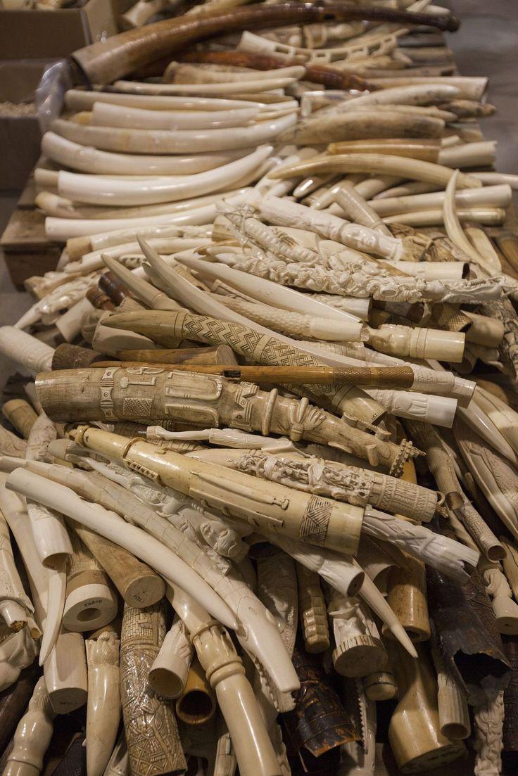 Namibia und Simbabwe Aus für Elfenbein-Handel - nachrichten.at