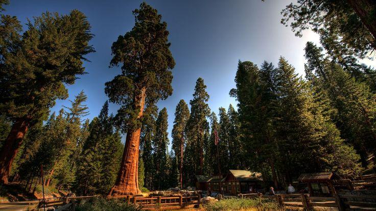 Evening Nature Beautfiul Cool Beauty Redwood