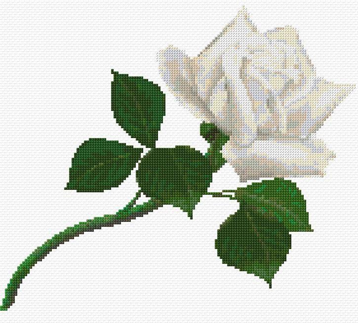 free cross stitch chart white rose