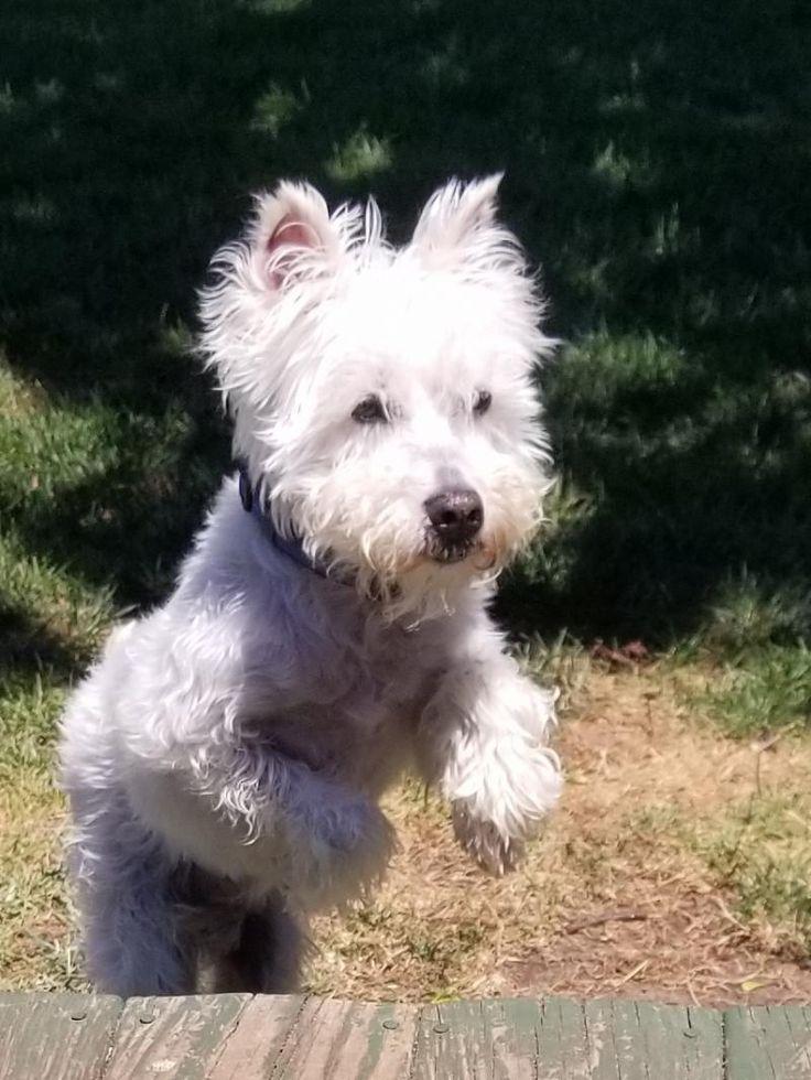 Adopt Buster on Petfinder Dog pictures, Dog adoption