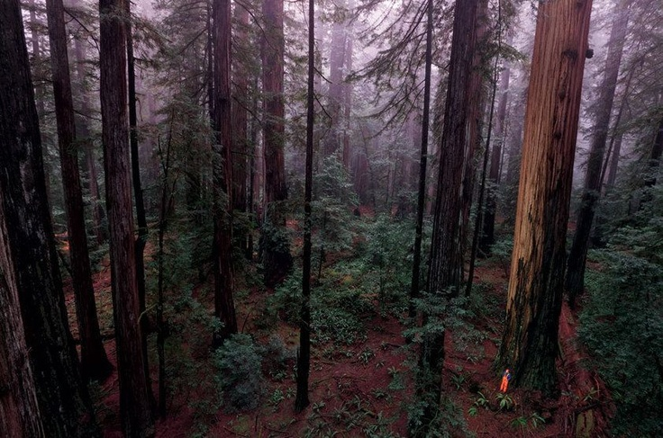 Parque Estadual de Sequoias Humboldt, no Norte da Califórnia, Estados Unidos