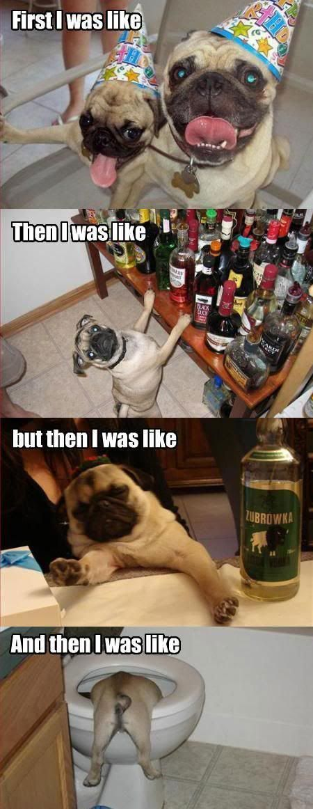 Pug Life Man--From Katie!