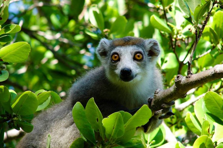 Look out for the 49 different species of lemurs, the iconic symbol of Madagascar's wildlife
