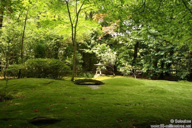 Moss garden at Nonomiya-jinja