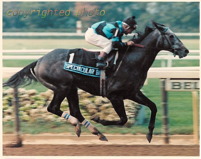 1980 Strub Stakes: Spectacular Bid in world-record time.